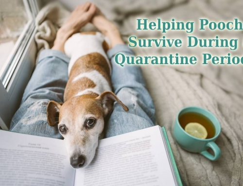 Helping Pooch Survive During a Quarantine Period