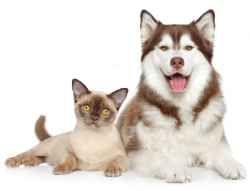 What You Need to Know About COVID-19 and Pets