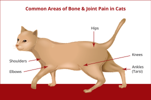 Joint Problems in Cats