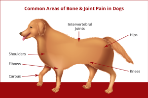 Joint Problems in Dogs